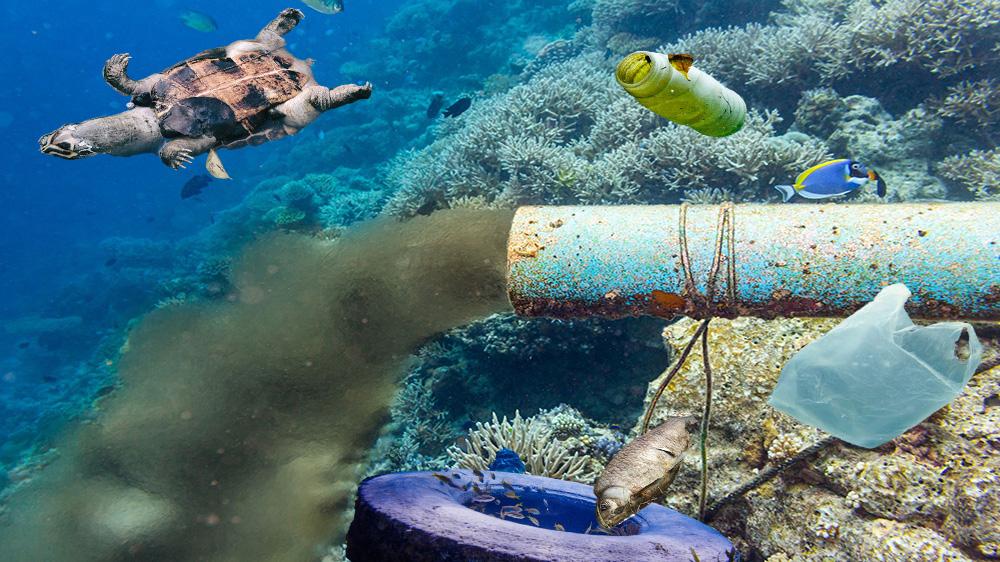 آنالیز عناصر سمی موجود در ماهی